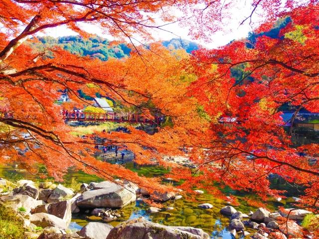 香嵐渓画像