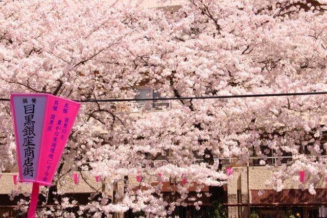目黒川桜イメージ