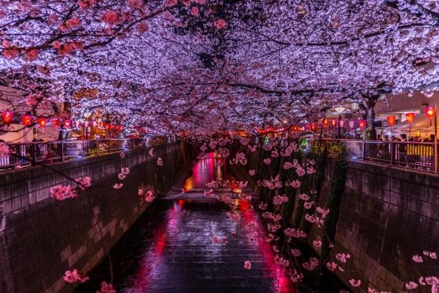目黒川の夜桜のライトアップ