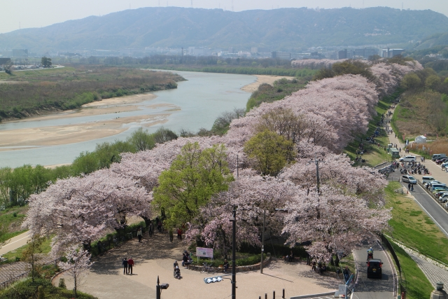 淀川河川公園全景